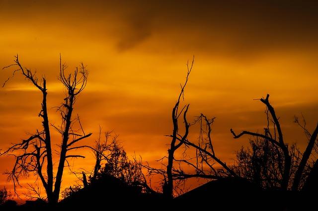 火災旋風の被害