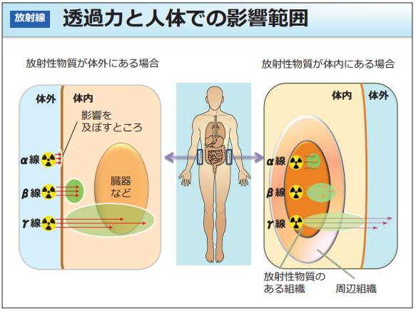 放射線の影響範囲